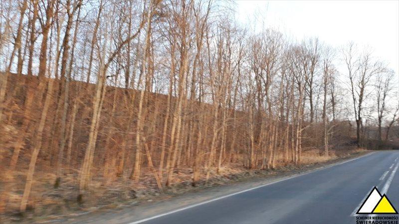 Działka leśna na sprzedaż Kościelniki Górne, Pogórze Izerskie  4800m2 Foto 6