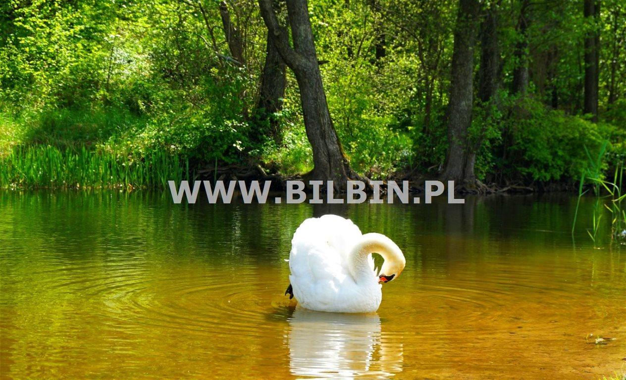 Działka siedliskowa na sprzedaż Kotowina  5666m2 Foto 7