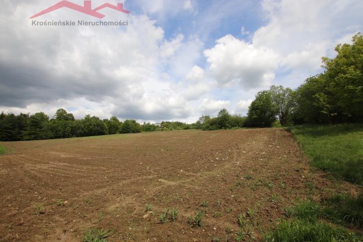 Działka rolna na sprzedaż Korczyna  3000m2 Foto 7