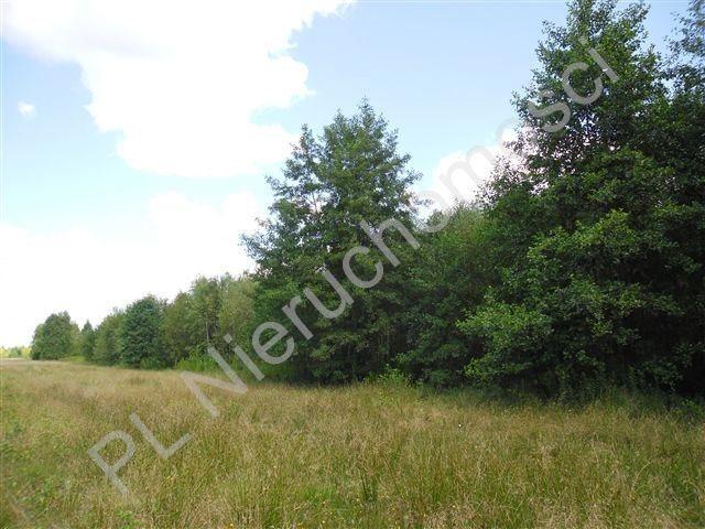 Działka rolna na sprzedaż Cisówka  30300m2 Foto 2