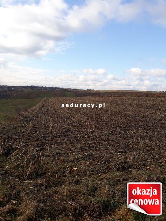 Działka rolna na sprzedaż Głęboka  10143m2 Foto 3