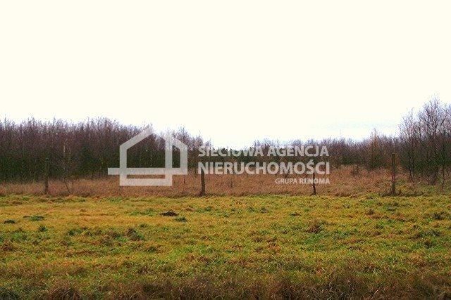 Działka leśna na sprzedaż Strzeczona  206330m2 Foto 6