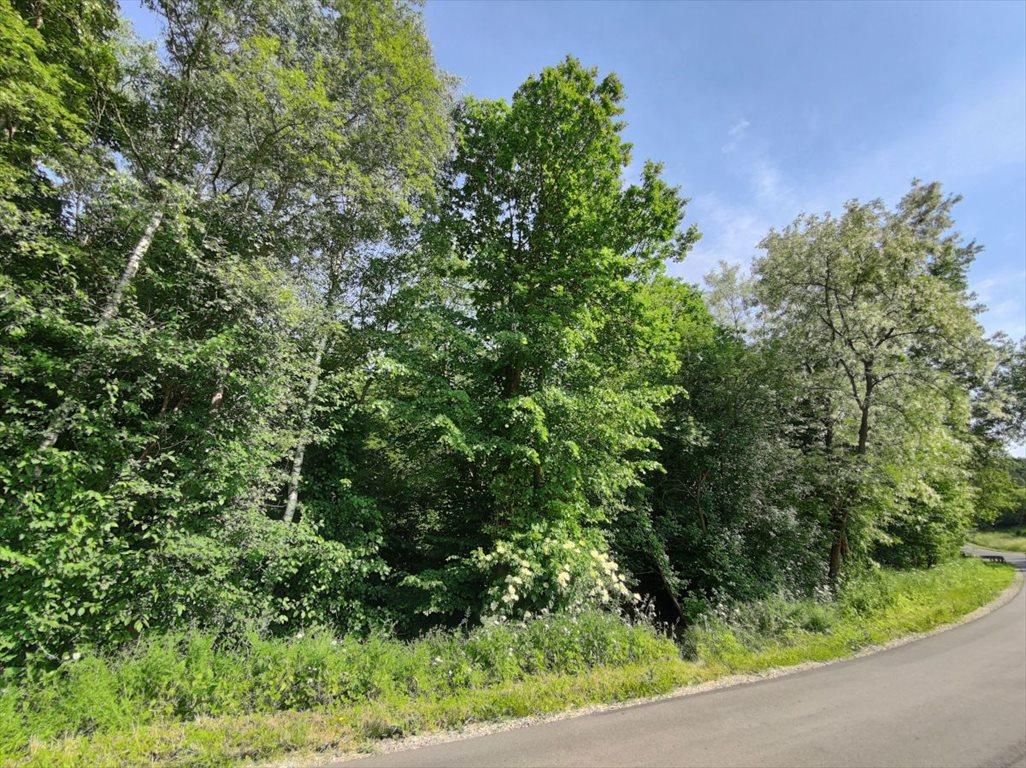 Działka leśna na sprzedaż Borówna  3600m2 Foto 2