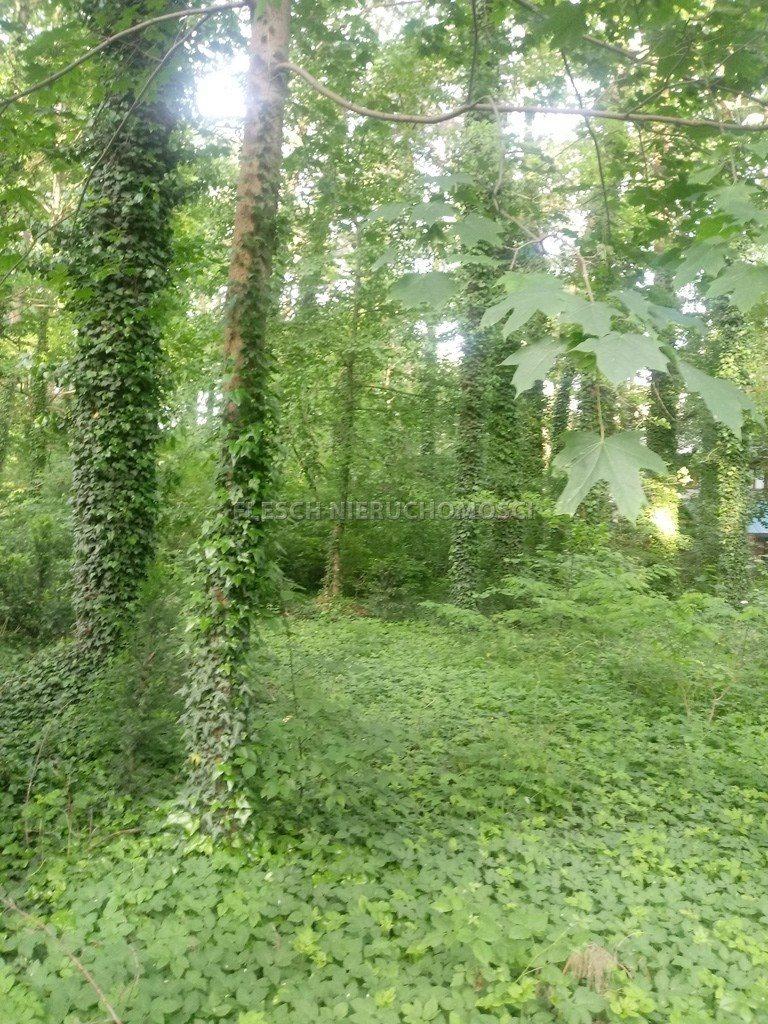 Działka leśna z prawem budowy na sprzedaż Podkowa Leśna  3239m2 Foto 1
