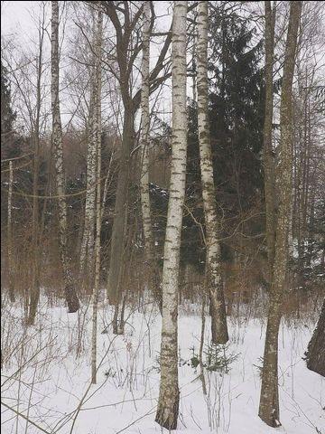Działka leśna na sprzedaż Zerbuń  42900m2 Foto 3