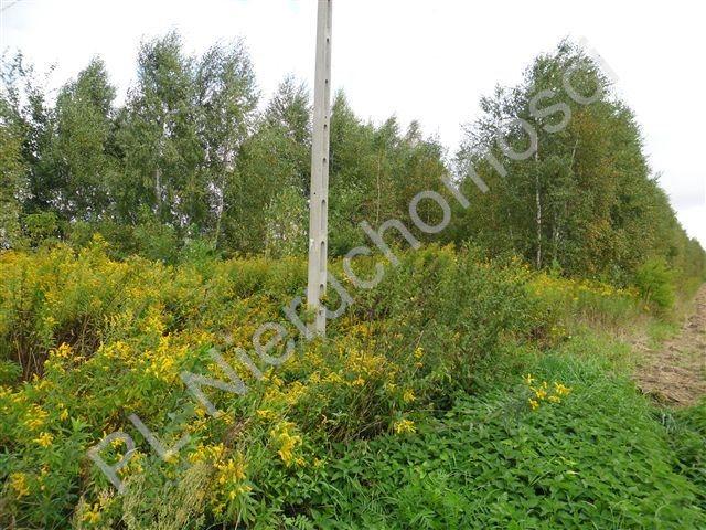 Działka budowlana na sprzedaż Glinianka  8200m2 Foto 6