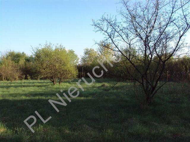 Działka rolna na sprzedaż Osuchów  27100m2 Foto 6
