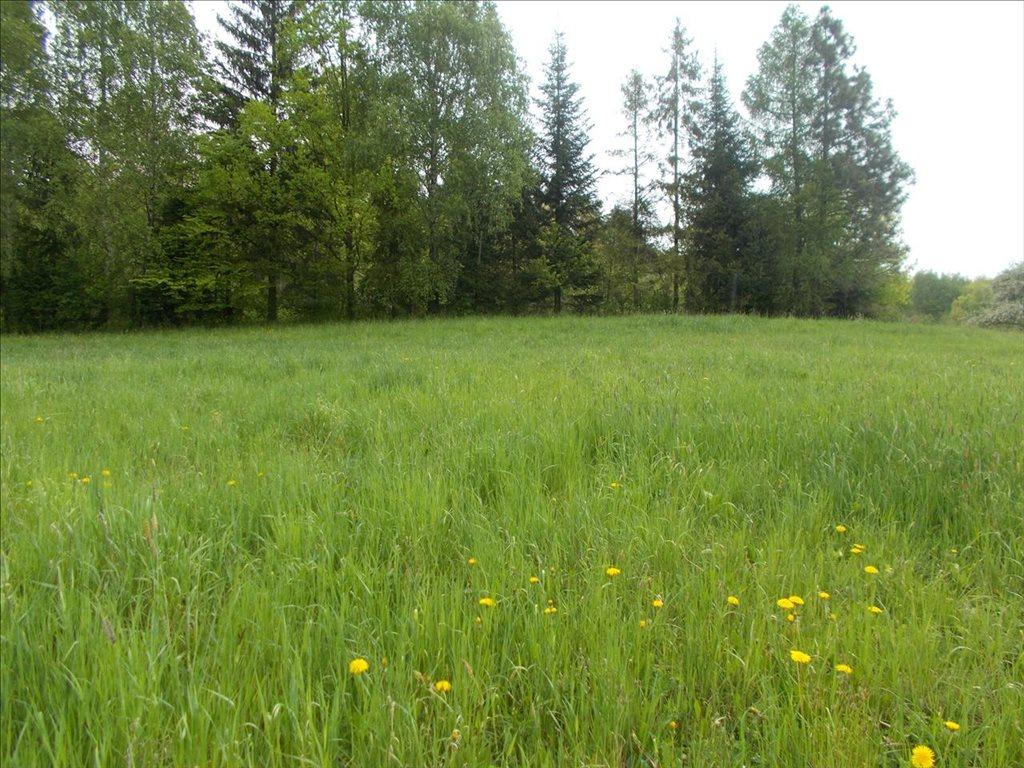 Działka rolna na sprzedaż Sułów, Biskupice  15000m2 Foto 7