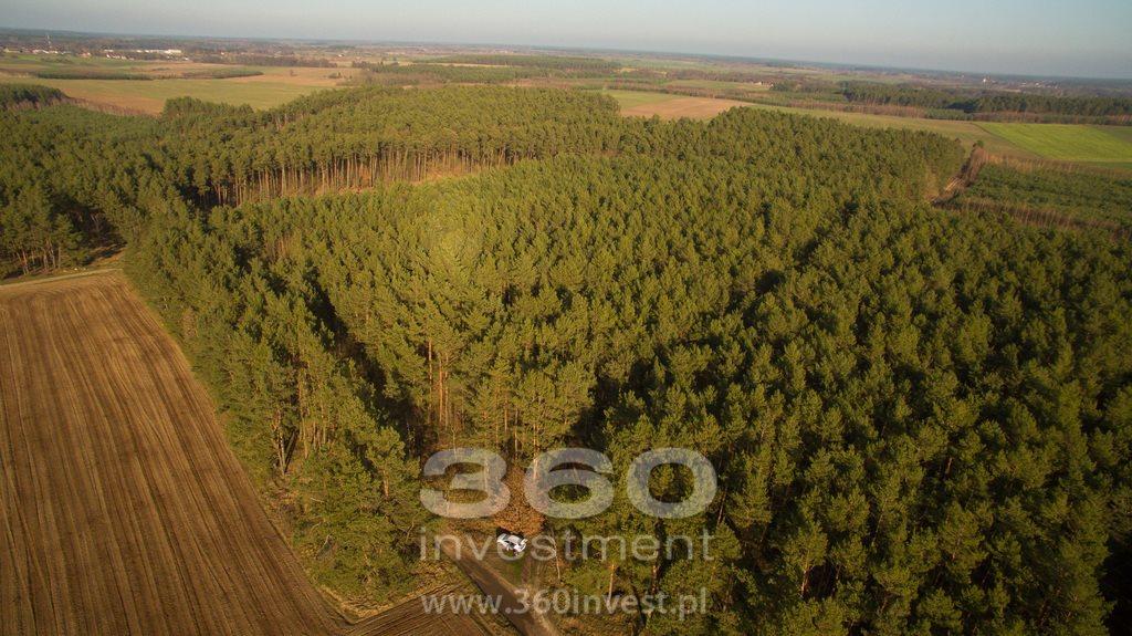 Działka leśna na sprzedaż Słonów  10800m2 Foto 2
