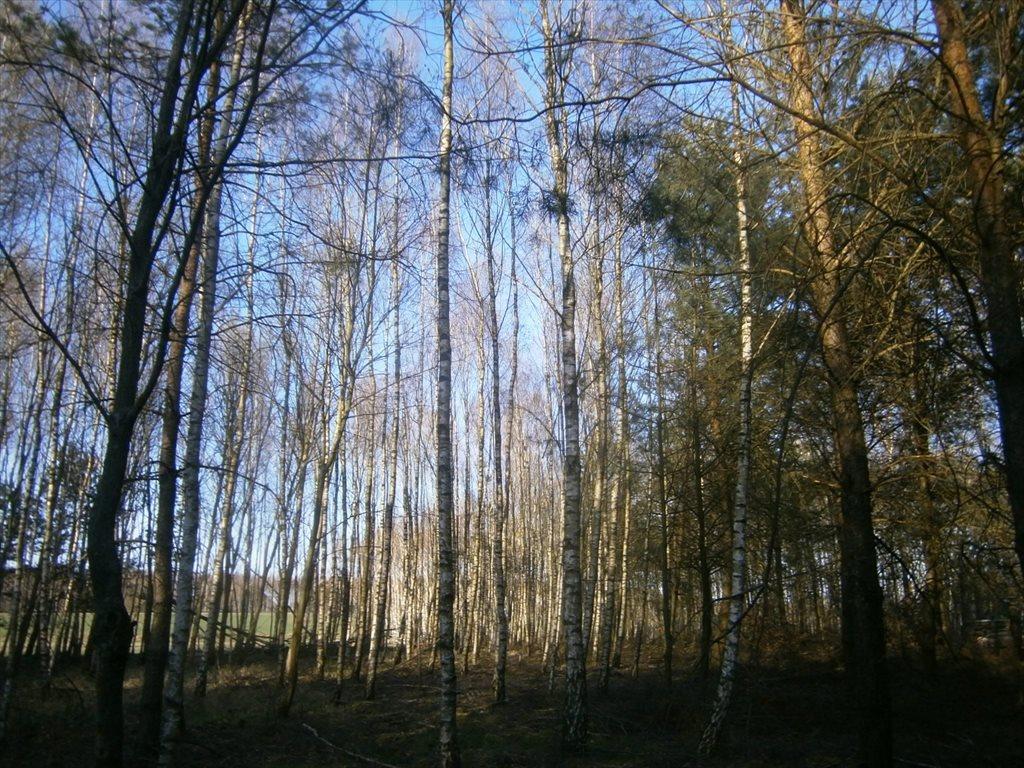 Działka leśna na sprzedaż Stara Wiśniewka  55661m2 Foto 10