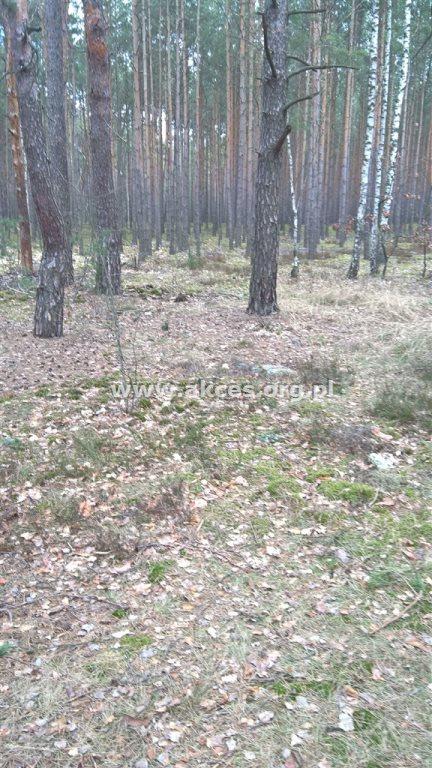 Działka leśna na sprzedaż Otwock, Soplicowo  5000m2 Foto 2