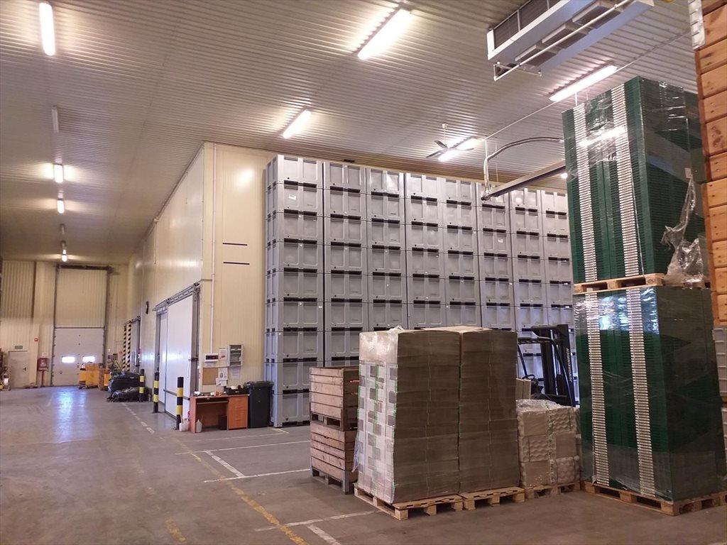 Lokal użytkowy na sprzedaż Wsola  1800m2 Foto 5