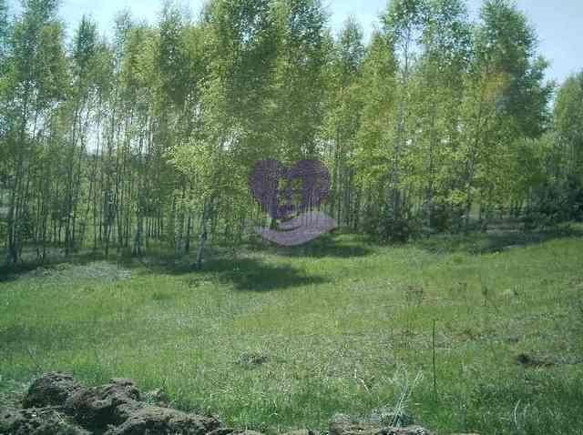 Działka rolna na sprzedaż Studzianki  1611m2 Foto 4