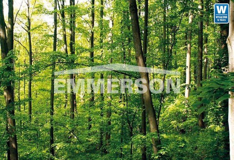 Działka leśna na sprzedaż Piaski Duchowne  5000m2 Foto 3
