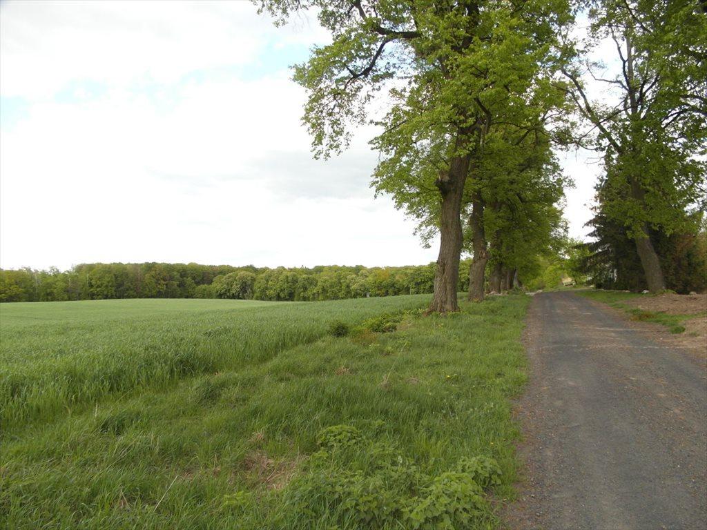 Działka rolna na sprzedaż Orle  111800m2 Foto 1