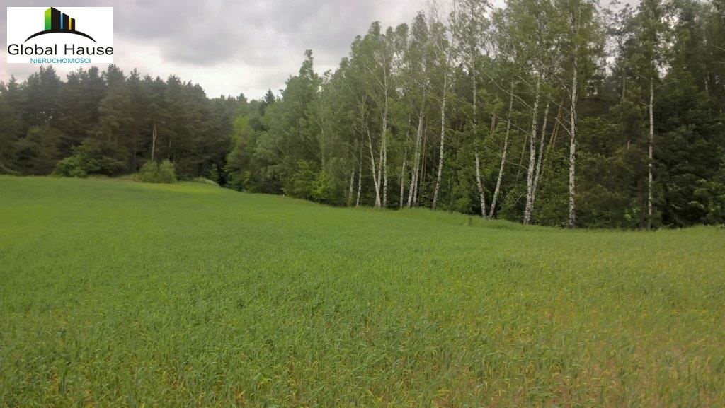 Działka rolna na sprzedaż Nowe Krzywe  3080m2 Foto 1
