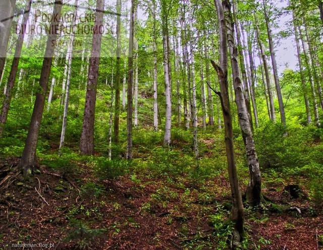 Działka leśna na sprzedaż Pstrągowa  15700m2 Foto 1