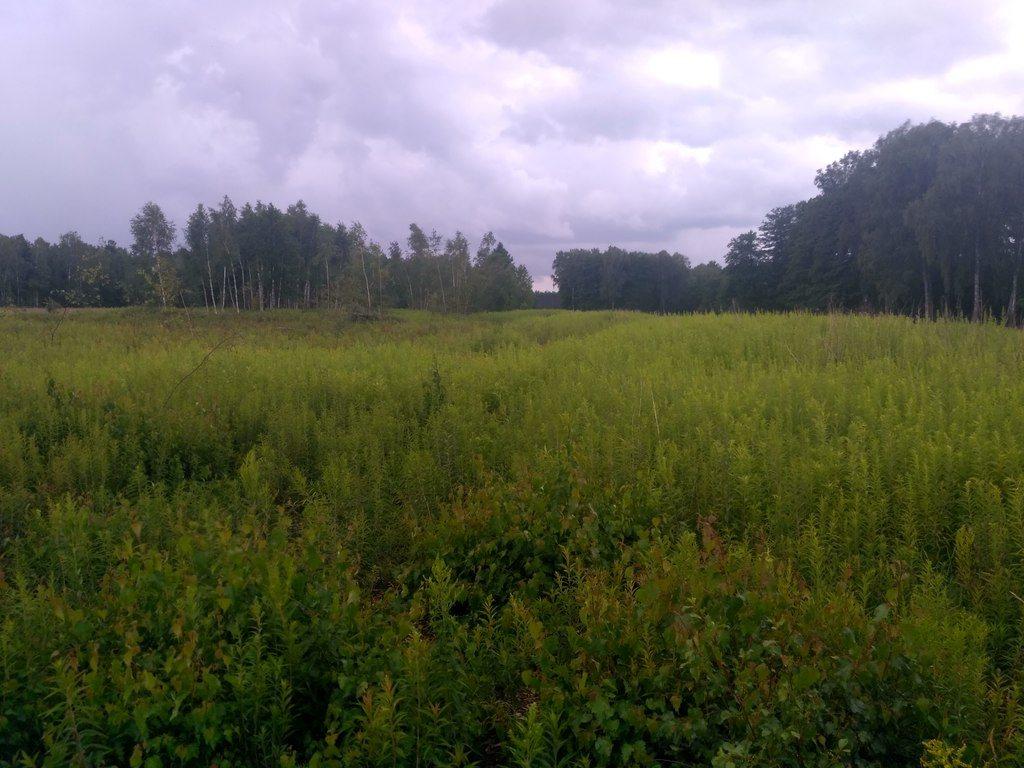 Działka rolna na sprzedaż Mokre  13000m2 Foto 3