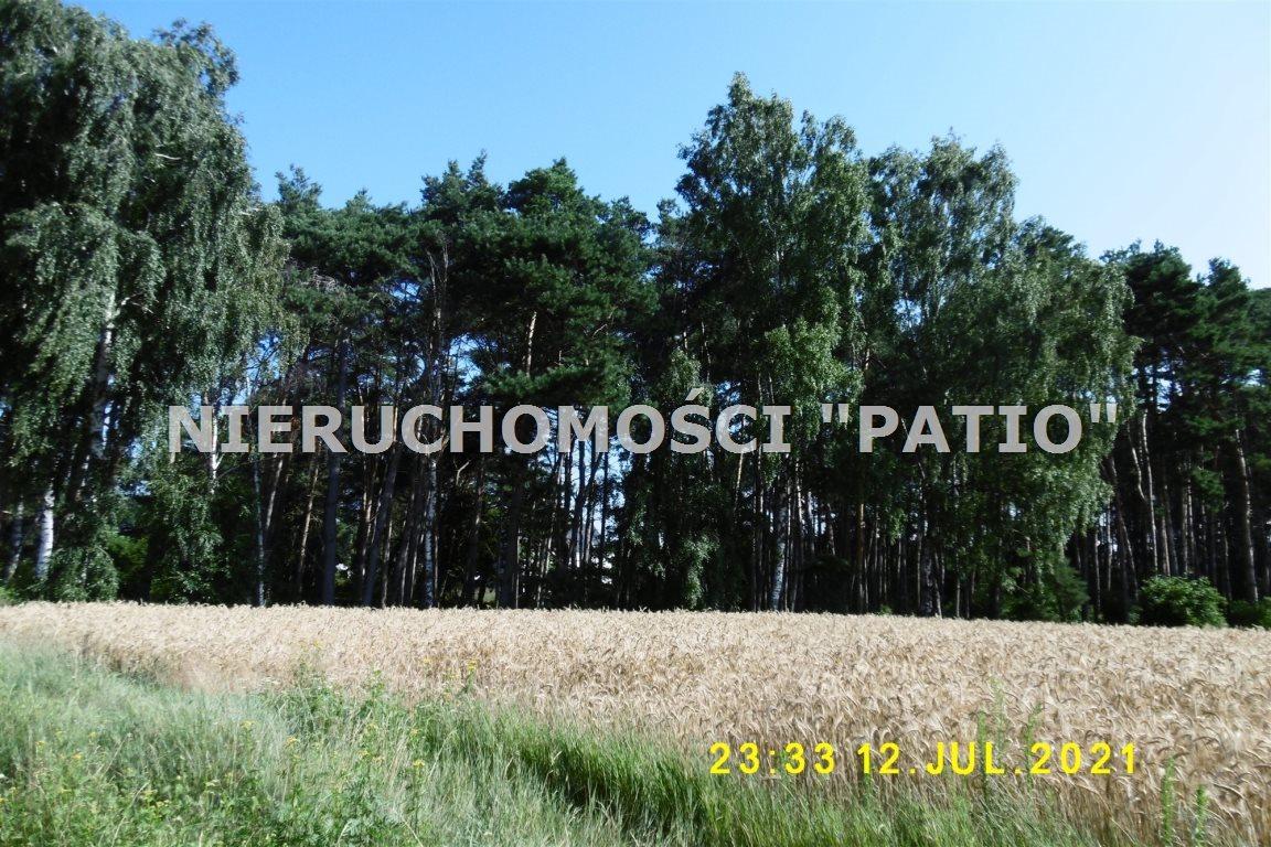 Działka leśna na sprzedaż Kórnik, Radzewo, Dworzyska  4700m2 Foto 4