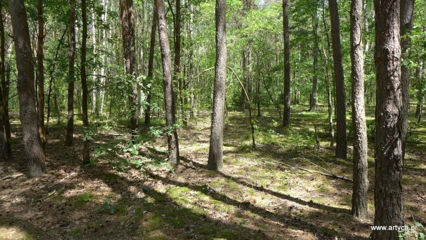 Działka rolna na sprzedaż Teofilówka  40371m2 Foto 5