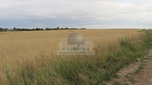 Działka rolna na sprzedaż Dolice  4800m2 Foto 2