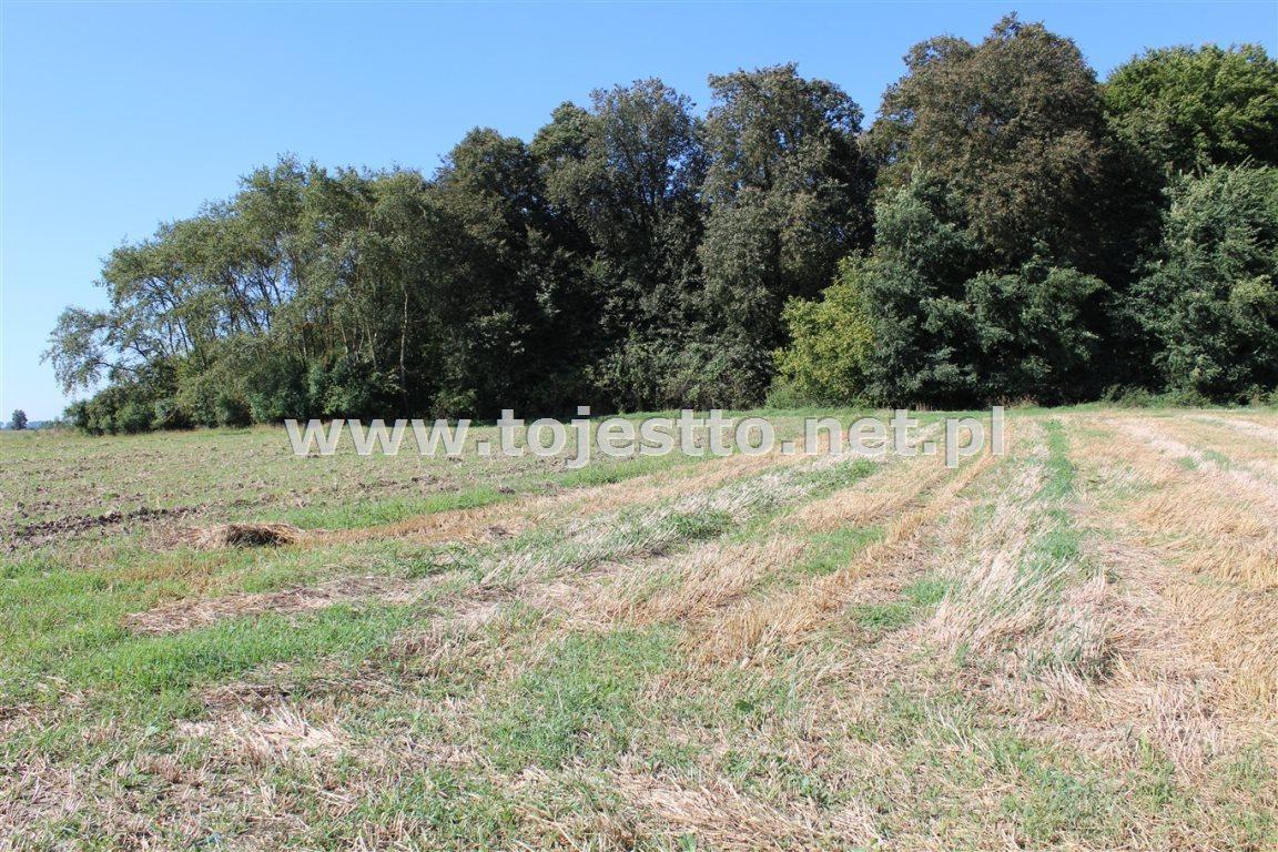 Działka leśna na sprzedaż Werbkowice  2500m2 Foto 1