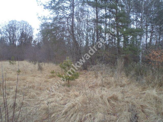 Działka leśna na sprzedaż Raducz  8600m2 Foto 2