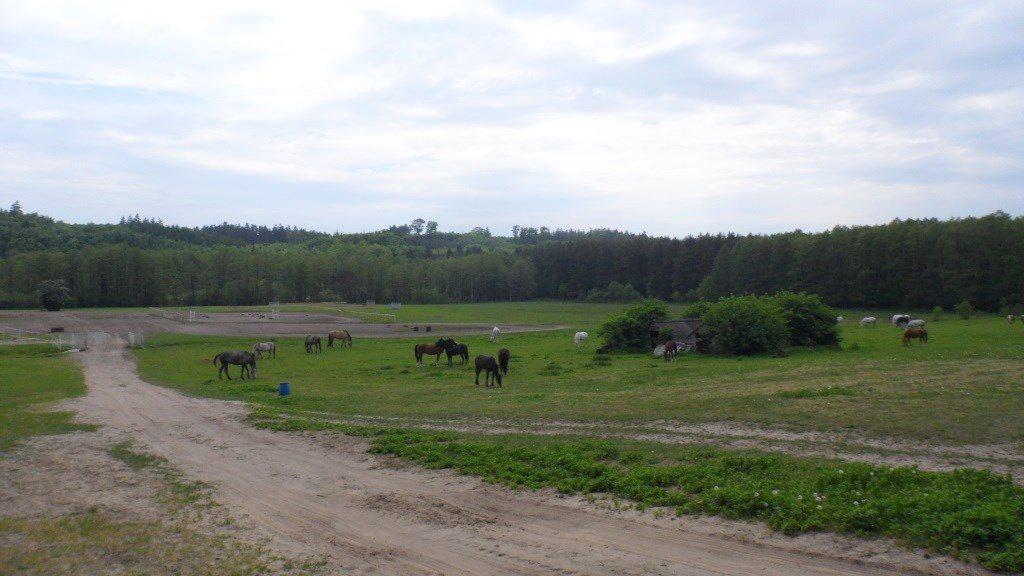 Działka rolna na sprzedaż Choczewo  5154m2 Foto 7