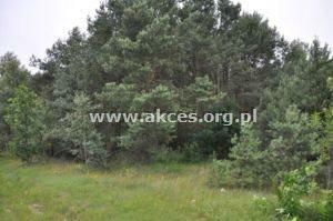 Działka leśna na sprzedaż Różan  13047m2 Foto 3