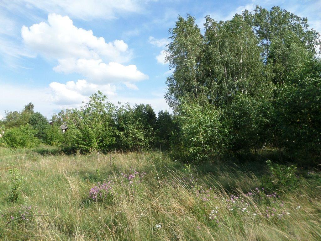 Działka budowlana na sprzedaż Łosia Wólka, Brzozowa  1000m2 Foto 1