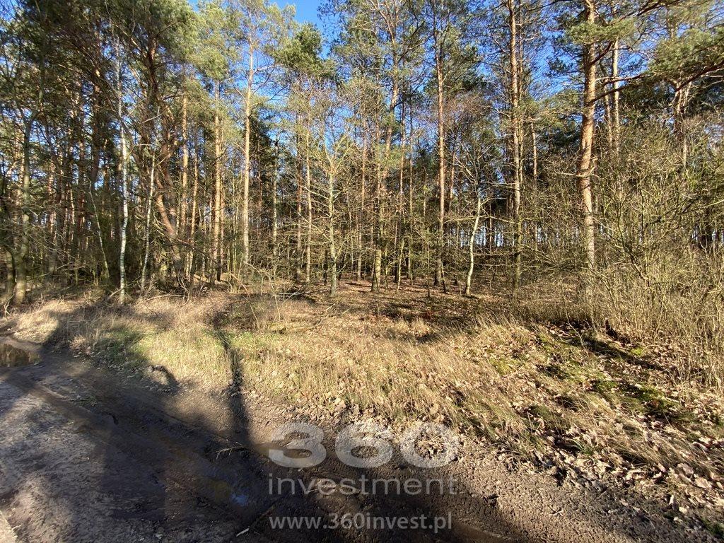 Działka leśna na sprzedaż Słonów  10800m2 Foto 6