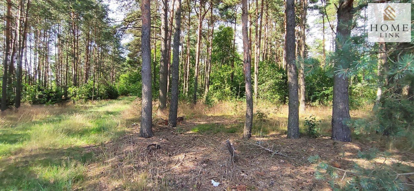 Działka leśna na sprzedaż Nowy Dwór  171900m2 Foto 7