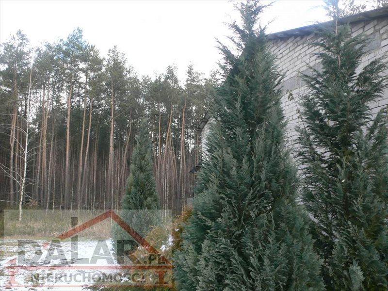 Działka budowlana na sprzedaż Chynów, Grobice Nowe  3526m2 Foto 12
