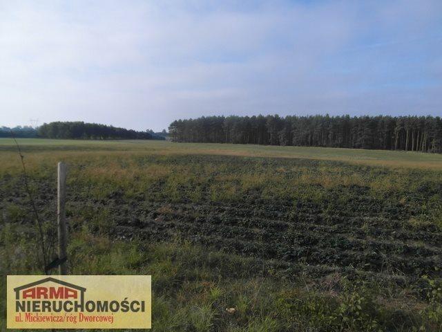 Działka rolna na sprzedaż Poczernin  3000m2 Foto 1
