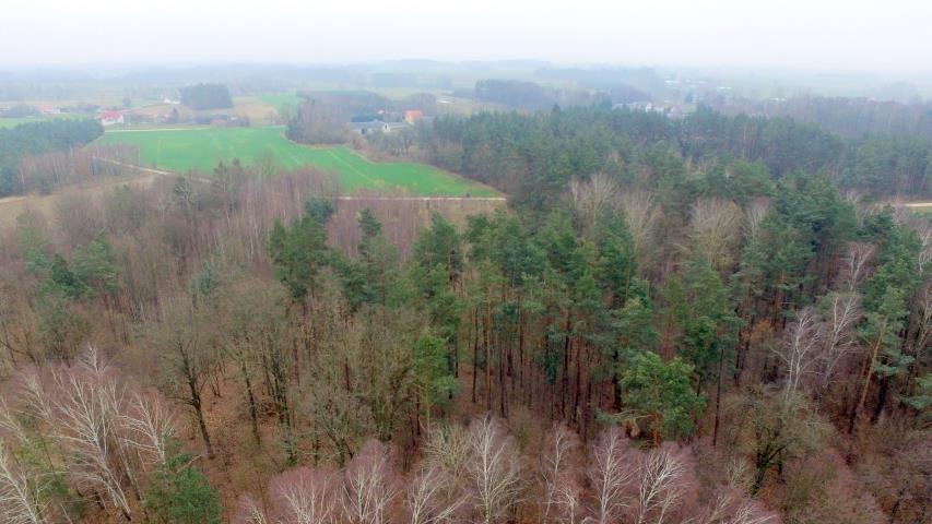 Działka leśna na sprzedaż Stary Cydzyn  8000m2 Foto 9