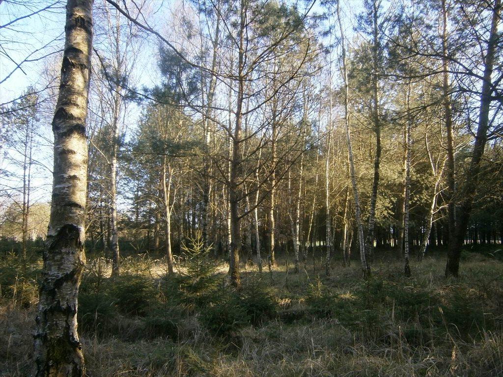 Działka leśna na sprzedaż Stara Wiśniewka  55661m2 Foto 11