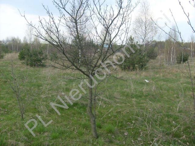 Działka rolna na sprzedaż Mszczonów  18000m2 Foto 1