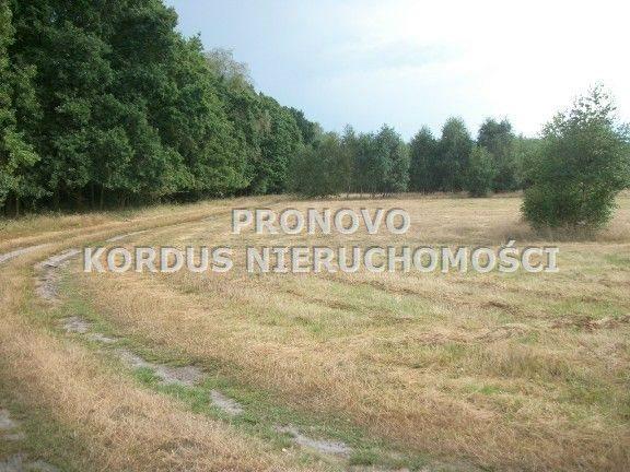 Działka leśna na sprzedaż Wojtkowa, Trzcianiec  1958400m2 Foto 4