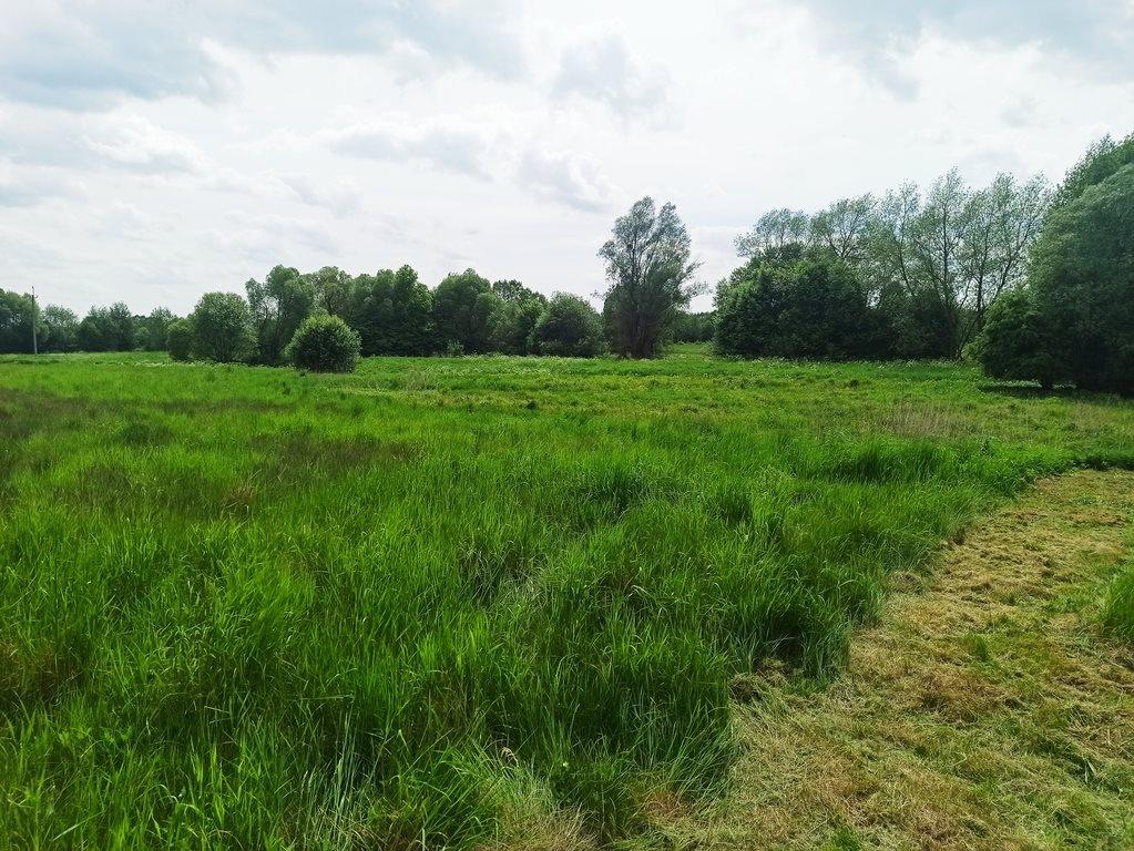 Działka rolna na sprzedaż Nowe Marzy  7800m2 Foto 4