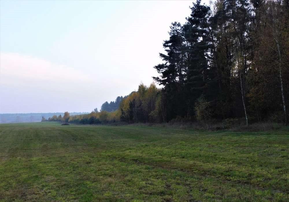 Działka rolna na sprzedaż Orzyny  3300m2 Foto 4