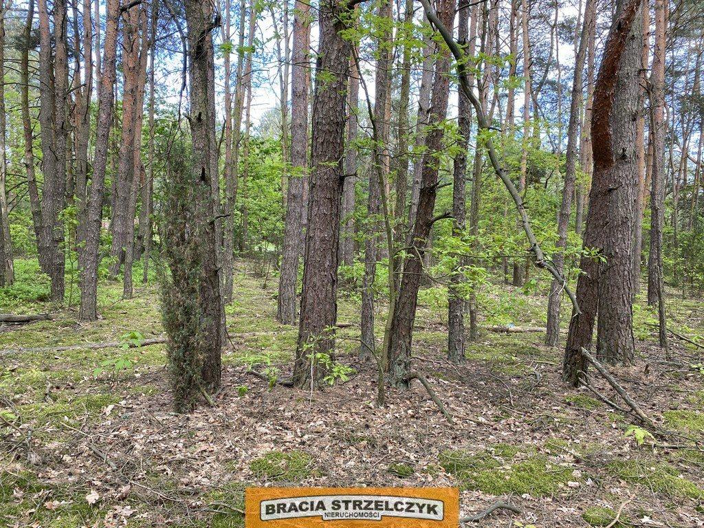 Działka leśna na sprzedaż Wólka Mlęcka  2800m2 Foto 5