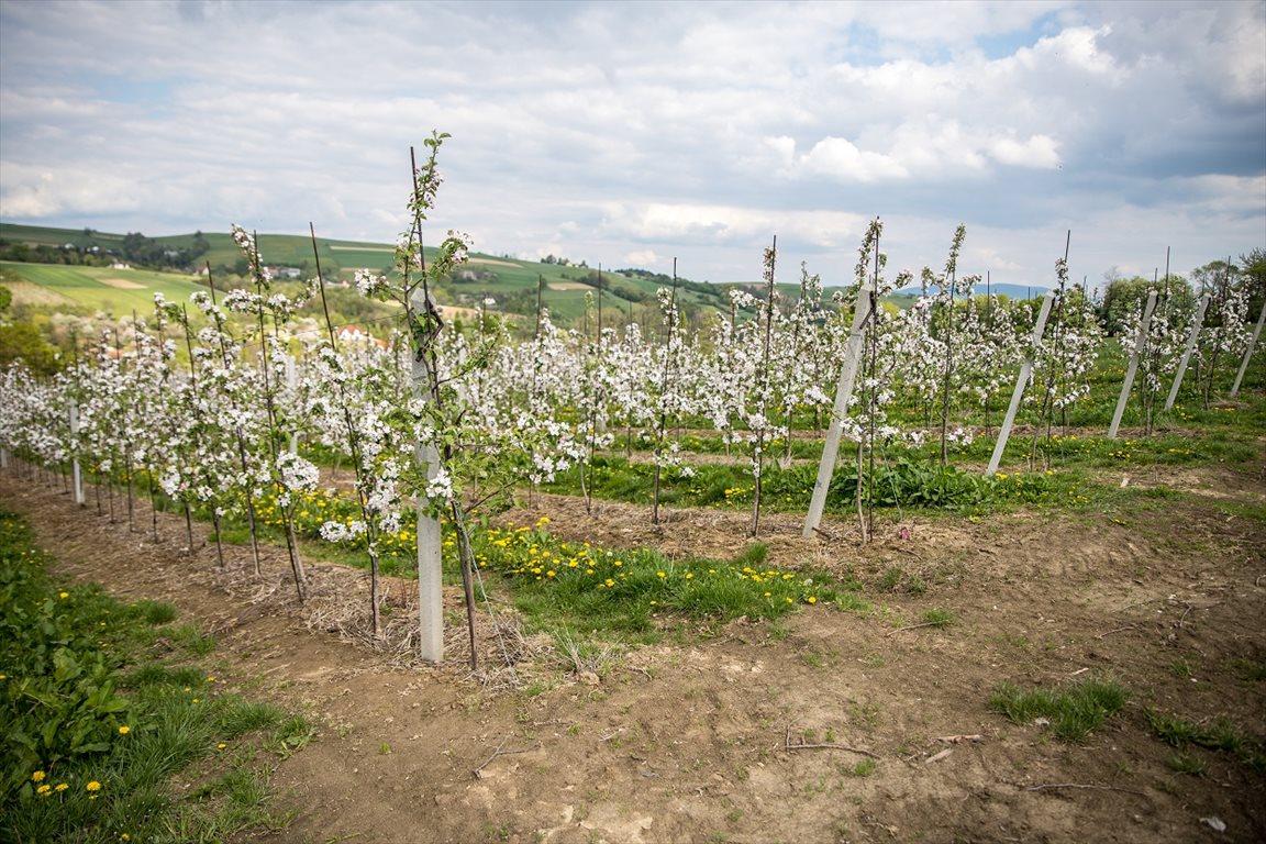 Działka gospodarstwo rolne na sprzedaż Korzenna  114m2 Foto 2