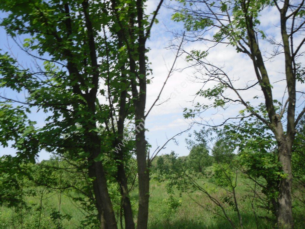 Działka siedliskowa na sprzedaż Sowia Wola  15000m2 Foto 4
