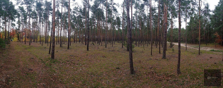 Działka leśna na sprzedaż Leśnik  1980m2 Foto 9