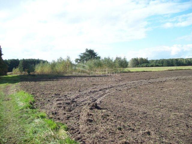 Działka rolna na sprzedaż Janowicze  3001m2 Foto 5