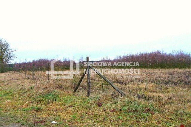 Działka leśna na sprzedaż Strzeczona  206330m2 Foto 4
