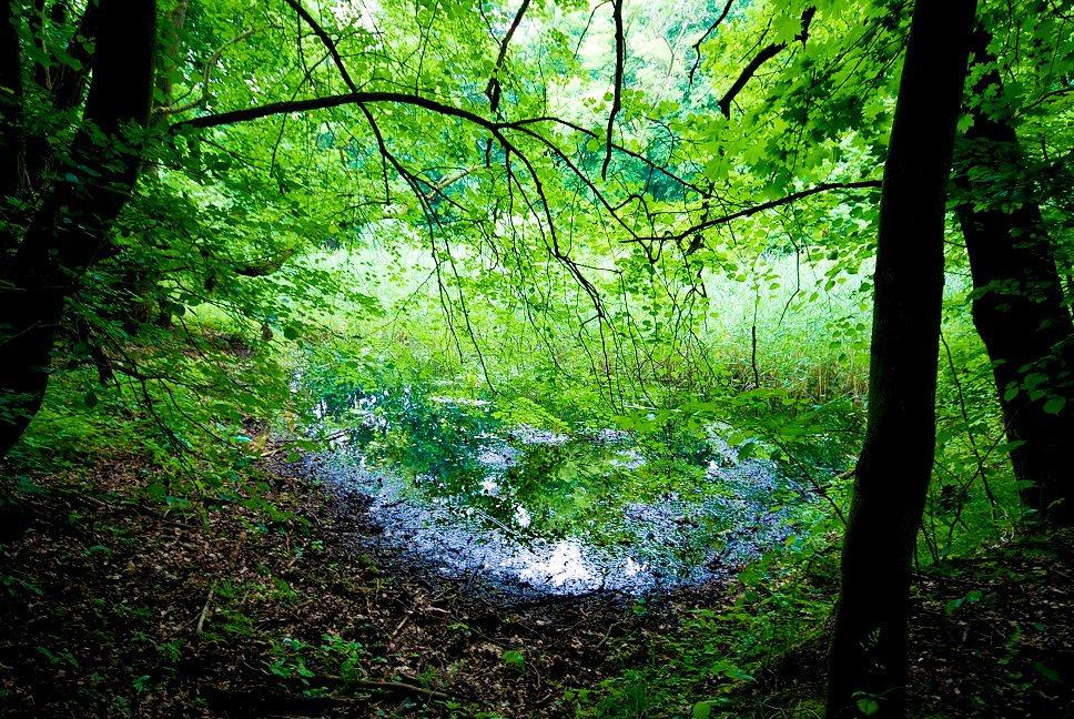 Działka leśna na sprzedaż Grodzanów  46000m2 Foto 5