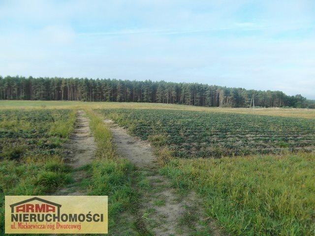 Działka rolna na sprzedaż Poczernin  3000m2 Foto 3