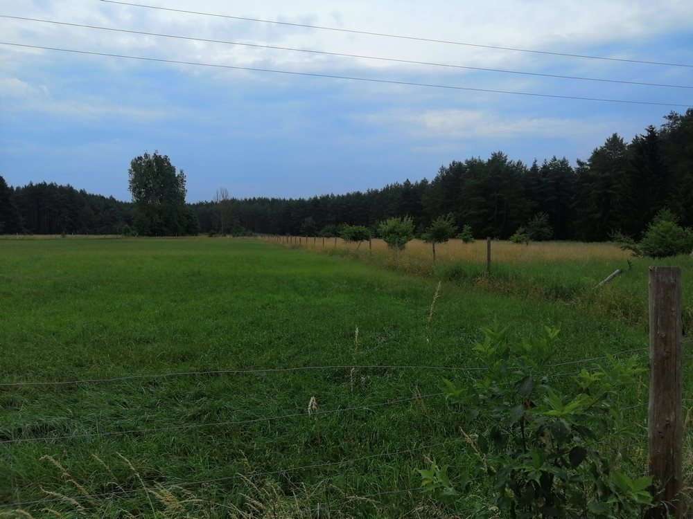 Działka siedliskowa na sprzedaż Sowno  16100m2 Foto 5