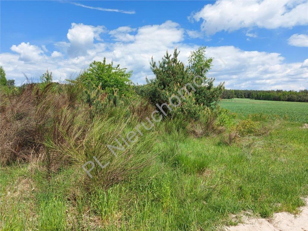 Działka rolna na sprzedaż Stare Groszki  12200m2 Foto 8